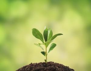 Основа роста и развития